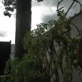 Nonostante la totale mancanza di supporto artificiale (chimico o architettonico) nonchè la marcata incuria post-estiva, le piante di santi pomodori di quest'anno hanno raggiunto la soglia del doppio centinaio di […]
